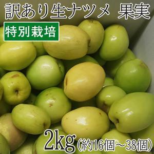 沖縄県産 特別栽培 果実 ナツメ なつめ 2kg(16個〜38個) フルーツ スーパーフード スーパーフルーツ|mantenmiyakojima