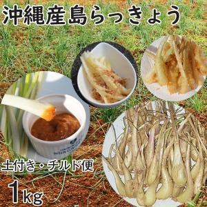 沖縄産 生 島らっきょう ラッキョウ 土付き 1kg チルド発送 大小混合 らっきょう mantenmiyakojima