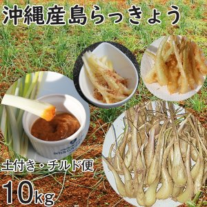 沖縄産 生 島らっきょう ラッキョウ 土付き 10kg チルド 大小混合 らっきょう 1kg1100円 mantenmiyakojima