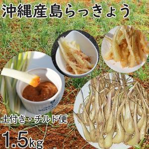 沖縄産 生 島らっきょう ラッキョウ 土付き 1.5kg チルド発送 大小混合 らっきょう 大きさバラバラ mantenmiyakojima