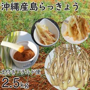 沖縄産 生 島らっきょう ラッキョウ 土付き 2.5kg チルド発送 大小混合 らっきょう 大きさバラバラ mantenmiyakojima