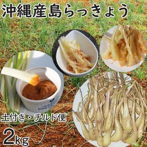 沖縄産 生 島らっきょう ラッキョウ 新鮮 土付き 2kg 大小混合 らっきょう mantenmiyakojima