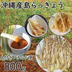 沖縄産 生 島らっきょう ラッキョウ 土付き 800g チルド発送 大小混合 らっきょう mantenmiyakojima