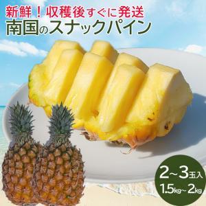 沖縄産 完熟 スナックパイン ボゴールパイン 中玉サイズ2〜3個(約1.5kg〜2kg)糖度15度以上 パイナップル パイン|mantenmiyakojima