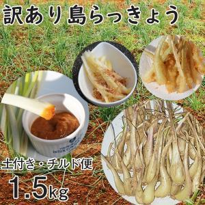 沖縄産 生 訳あり 島らっきょう 小玉 ラッキョウ 土付き 1.5kg チルド発送 らっきょう 大きさバラバラ mantenmiyakojima