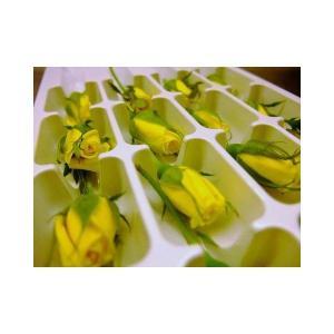 フレッシュ エディブルフラワー(食用花) ベルローズ(黄バラ...
