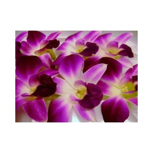 食用花として特別に栽培した花です。 *飾りに、サラダに *入荷した花をそのままその日に発送 卵白と砂...