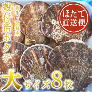 殻付活ホタテ 岩手・宮城産 大サイズ 13cm 8枚