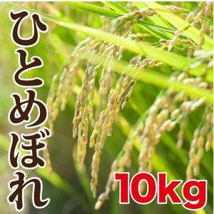 ひとめぼれ(10kg)|maru-kiku