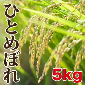 ひとめぼれ(5kg)|maru-kiku