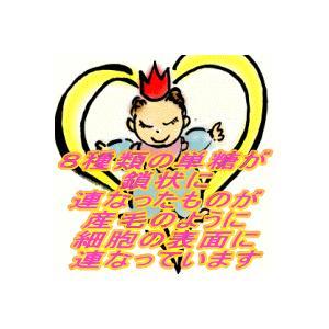 糖鎖顆粒(とうさかりゅう)ギャバ+トリプトファン・30包入・HBCフナト maru-sin 04