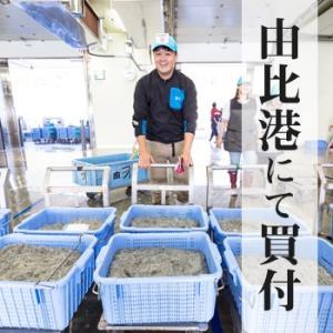 生しらす(生シラス)100g|静岡県産|marugen|03