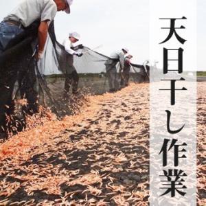 乾燥桜海老(干し桜えび)30g 3袋 送料無料 ネコポス対応 marugen 06