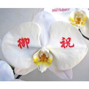 メッセージラン(白大輪のみ対応) ※1輪のみの価格です ※胡蝶蘭は別売りです maruhana-flower