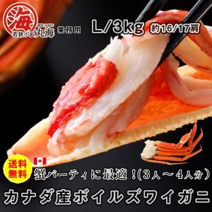 カニ かに 蟹 ズワイガニ ボイルズワイガニ カナダ産 3kg L|marukai
