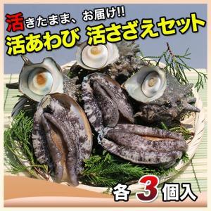 活えぞあわび養殖(韓国産)活ざざえ各3個入〔海水入酸素入]〔送料無料〕9種類のカラーレシピ&保存方法付なのでご家庭で料理できます それに100%活きたまま|marukatsu-onjuku11