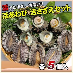 活えぞあわび養殖(韓国産)活ざざえ各5個入〔海水入酸素入〕〔送料無料〕9種類のカラーレシピ&保存方法付なのでご家庭で料理できます それに100%活きたまま|marukatsu-onjuku11