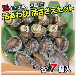 活えぞあわび養殖(韓国産)活ざざえ各7個入〔海水入酸素入〕〔送料無料〕9種類のカラーレシピ&保存方法付なのでご家庭で料理できます それに100%活きたまま|marukatsu-onjuku11