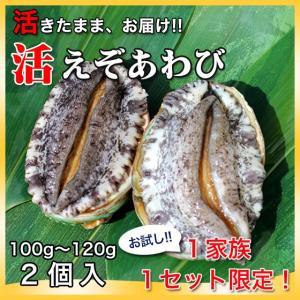 活えぞあわび養殖(韓国産)200g(100g〜120g×2個)〔海水入・酸素入〔送料無料〕4種類のカラーレシピと保存方法付|marukatsu-onjuku11