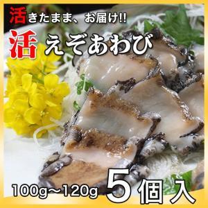 活えぞあわび養殖(韓国産)500g(100g〜120g×5個)〔海水入・酸素入〔送料無料〕4種類のカラーレシピと保存方法付|marukatsu-onjuku11
