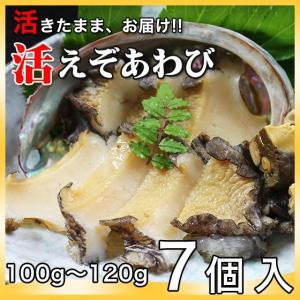 活えぞあわび養殖(韓国産)700g(100g〜120g×7個)〔海水入・酸素入〔送料無料〕4種類のカラーレシピと保存方法付|marukatsu-onjuku11