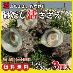 活さざえ450g(150〜180g×3個)〔海水入〕〔送料無料〕5種類のカラーレシピと保存方法付です。|marukatsu-onjuku11