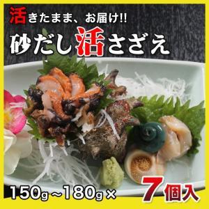活さざえ1.05kg(150〜180g×7個)〔海水入〕〔送料無料〕5種類のカラーレシピと保存方法付です。|marukatsu-onjuku11