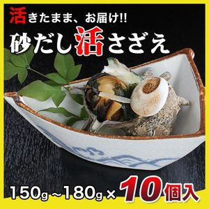 活さざえ1.5kg(150〜180g×10個)〔海水入〕〔送料無料〕5種類のカラーレシピと保存方法付です。|marukatsu-onjuku11