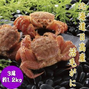 【冬季限定】北海道日高産活毛ガニ 毛がに 3尾 約1.2kg