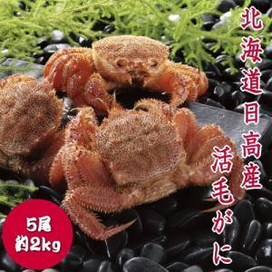 【冬季限定】北海道日高産活毛ガニ 毛がに 5尾 約400g×5