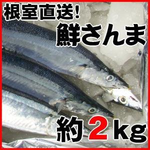 秋刀魚 北海道 さんま とろサンマ 約2kg 15〜17尾 1尾125g前後 根室産 お刺身にできる