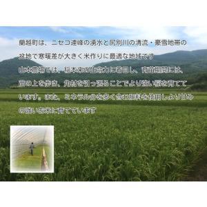 新米ゆめぴりか 北海道産 5kg×6回 山本米 蘭越産 極上 産地直送 令和2年度 5kg ×6回 定期便|marumanma|02