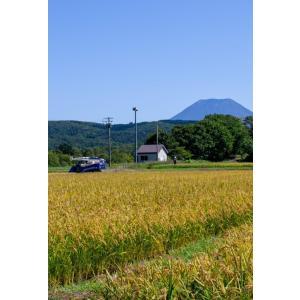 新米 ゆめぴりか 北海道産 10kg 国岡米 蘭越産 献上米 産地直送 令和2年度 5kg×2袋|marumanma|02