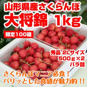 プレゼント ギフト さくらんぼ 大将錦 山形県産 1kg(5...