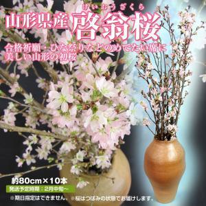 啓翁桜 送料無料 山形県産 10本 (80cm) 冬の桜