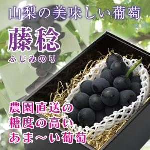 『藤稔(種なし)』 1房600g以上(ギフトボックス入り) ギフト のし無料 山梨県産 ぶどう|marunou