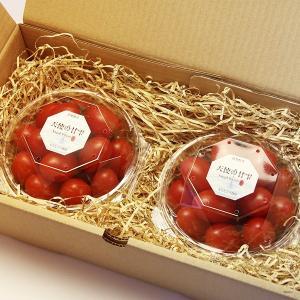 『天使の甘雫』 高糖度 アイコトマト 200g×2パック 山梨県産|marunou