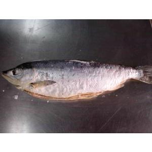 北洋産 沖紅鮭(大)約2.0kg|marutatsu