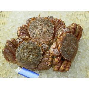 活毛ガニ3尾で約1.2kg|marutatsu