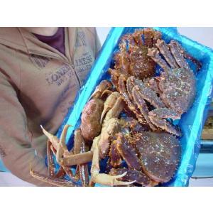 マルタツ蟹大漁セット(大)|marutatsu