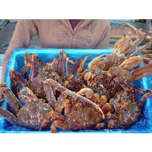 マルタツ蟹大漁セット(特大)|marutatsu