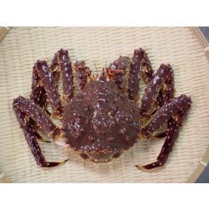 活本タラバガニ(メス)1.3kg-1.5kg前後|marutatsu