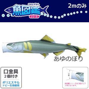 魚図鑑 あゆのぼり 2m ポリエステル 口金具付き 徳永鯉のぼり KOT-T-152-712|marutomi-a