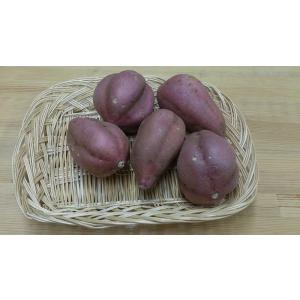 安納芋(生いも)|marutsuki