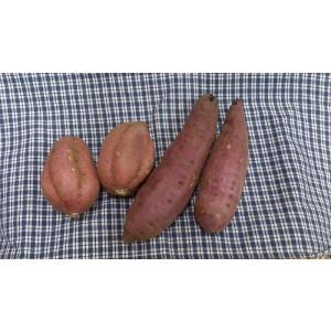 安納芋、紅はるか詰め合わせセット(生いも)|marutsuki