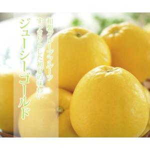 ジューシーゴールド(河内晩柑) 進物用 7.5kg 約15〜27玉