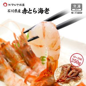 赤がすえび/赤とらえび ( 石川県産/お刺身用 ) 250g 10〜20匹|maruya