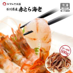 赤がすえび/赤とらえび ( 石川県産/お刺身用 ) 500g 20〜40匹|maruya