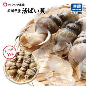 活ばい貝 ( 白ばい ) 石川県産 お刺身用 1.0kg 8〜13個|maruya