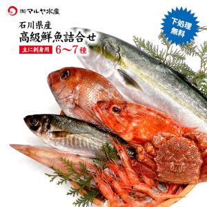 お中元 ギフト 四季の魚を直送!旬の獲れたて高級鮮魚 6〜7種類詰め合わせ (石川県産/主にお刺身用・下処理済み)  ※お届け日の指定不可 maruya